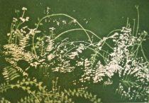 Lamorna Spring